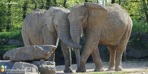 A118956 elephants zoo safari de pea 800x400