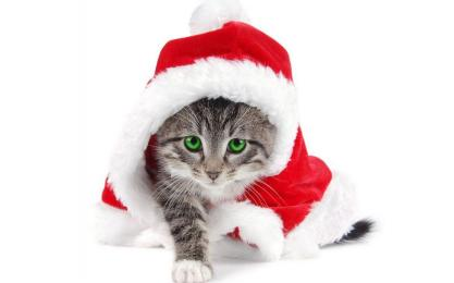 Chat deguise pere noel